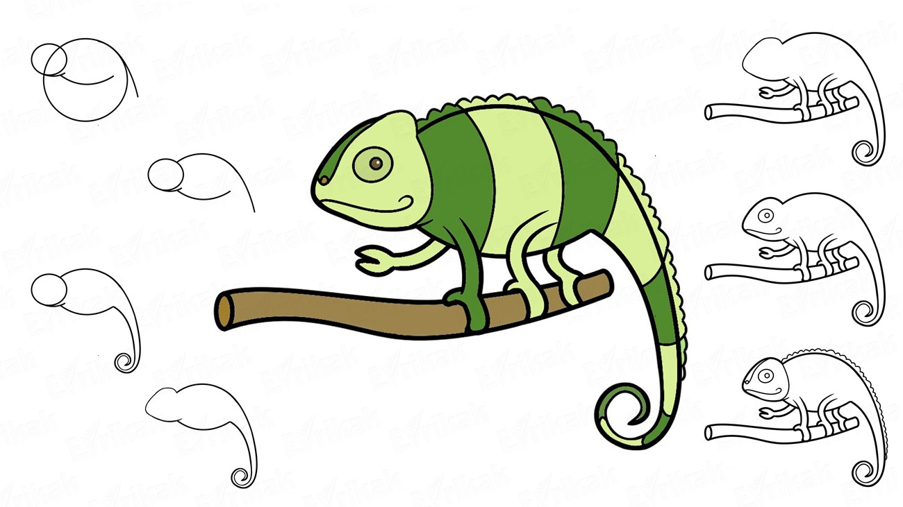 How to draw a chameleon step by step instruction (+ coloring)