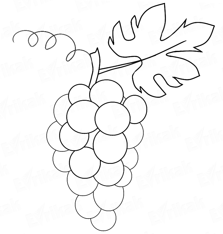 how to draw a bunch of grapes step by step Grape VATS Fibergalss