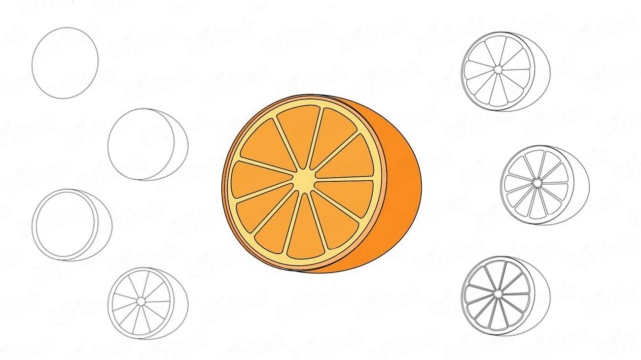 How to draw an orange in a cutaway view (+ coloring)