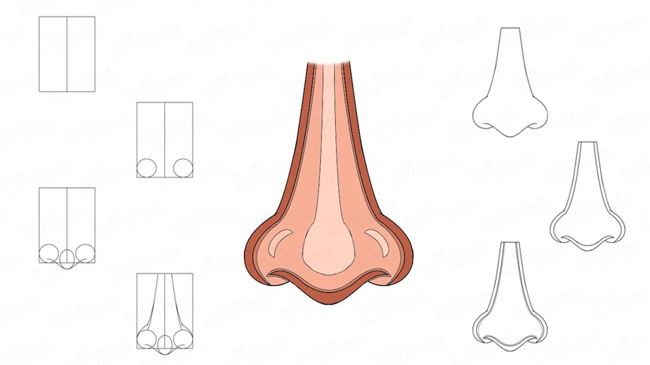 How to draw a human nose (+ coloring)