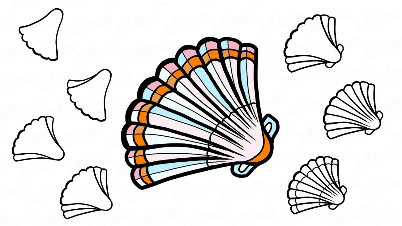 How to draw a seashell: step by step instruction (+ coloring)