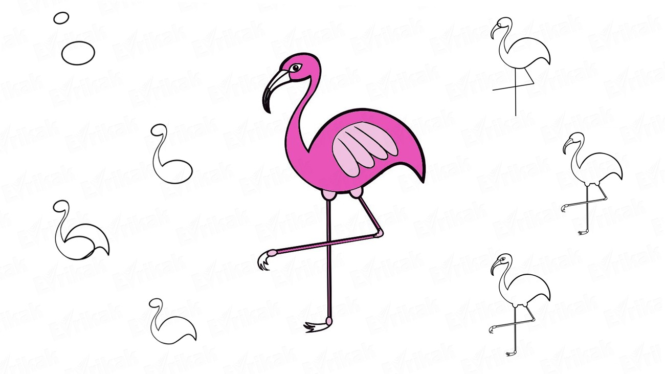 How to draw a pink flamingo (+ coloring)