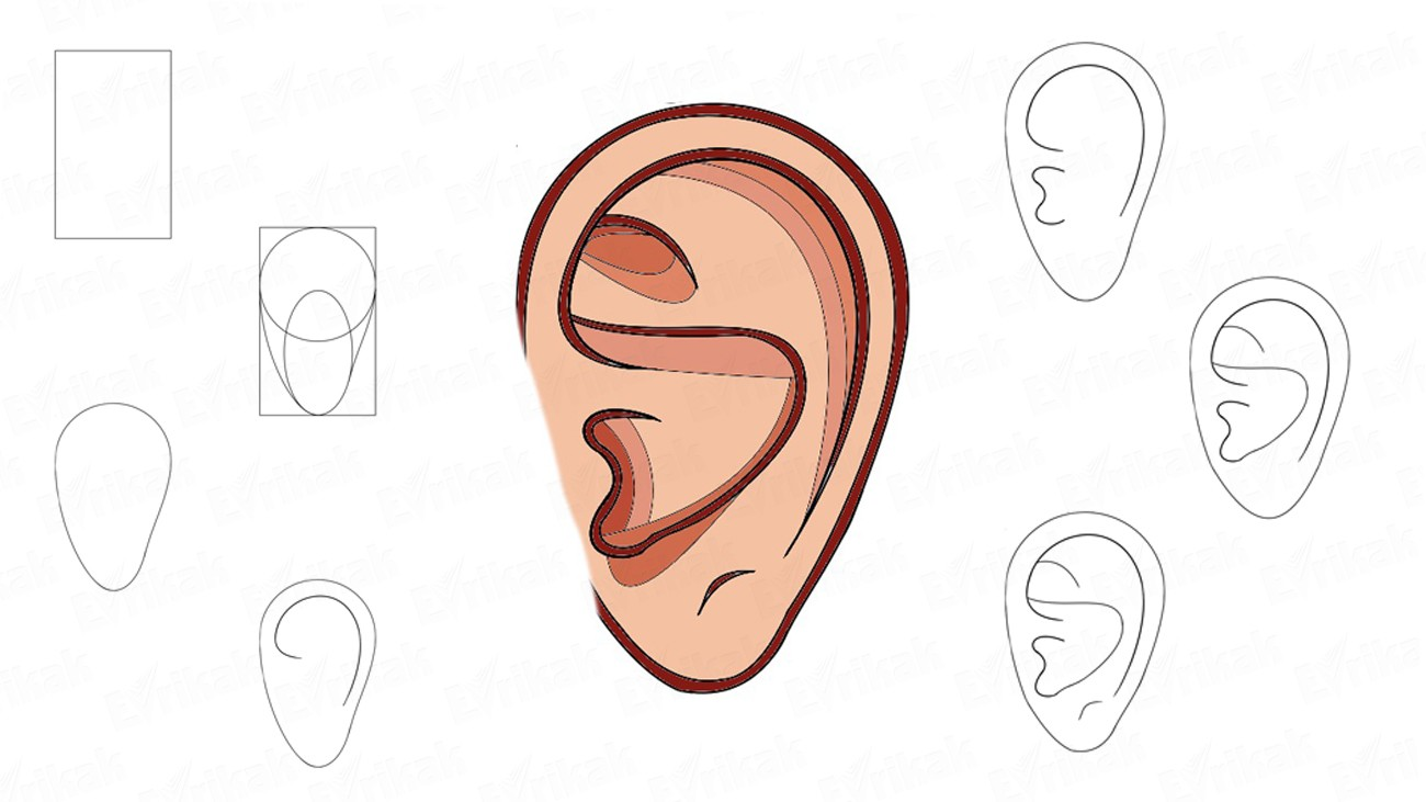 How to draw a human's ear (+ coloring)