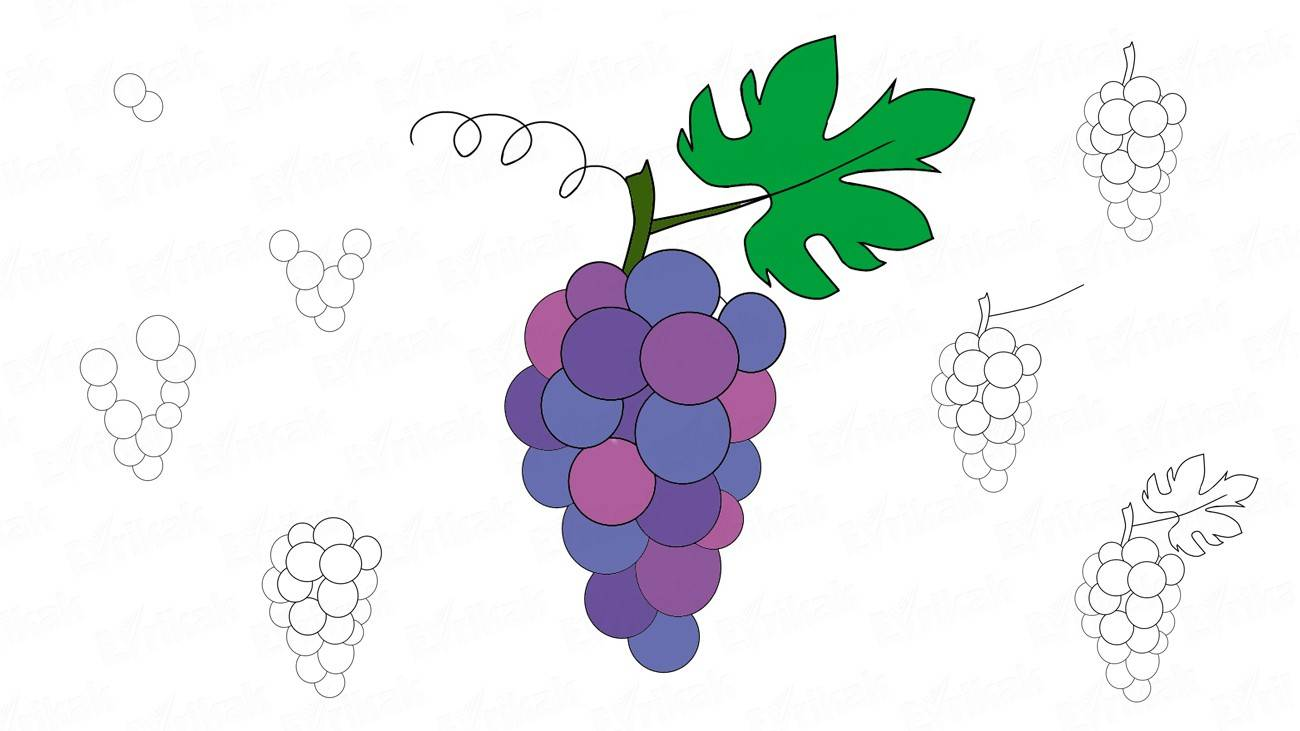 How to draw a branch of grapes (+ coloring)