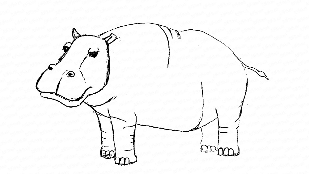 Learn to draw a hippo in stages using a pencil