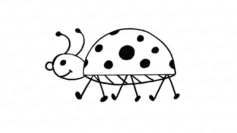 Learn to draw a real-like ladybird in stages
