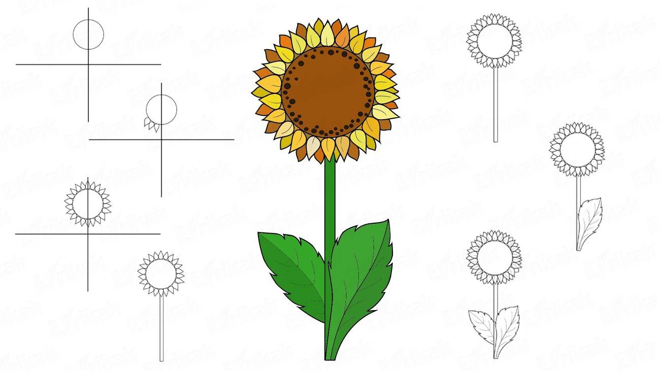 Learn to draw a beautiful sunflower for a child (+coloring)