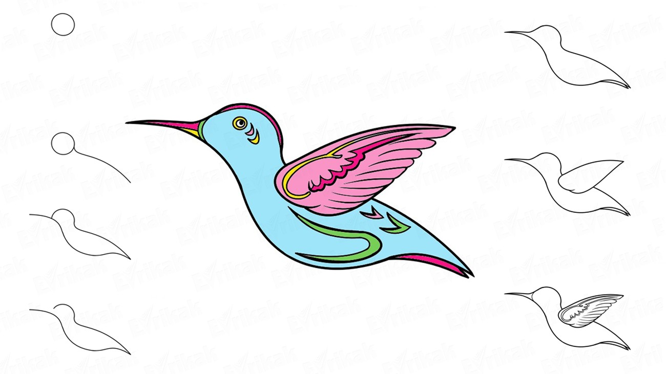 Draw a hummingbird in stages using a pencil (+ coloring)