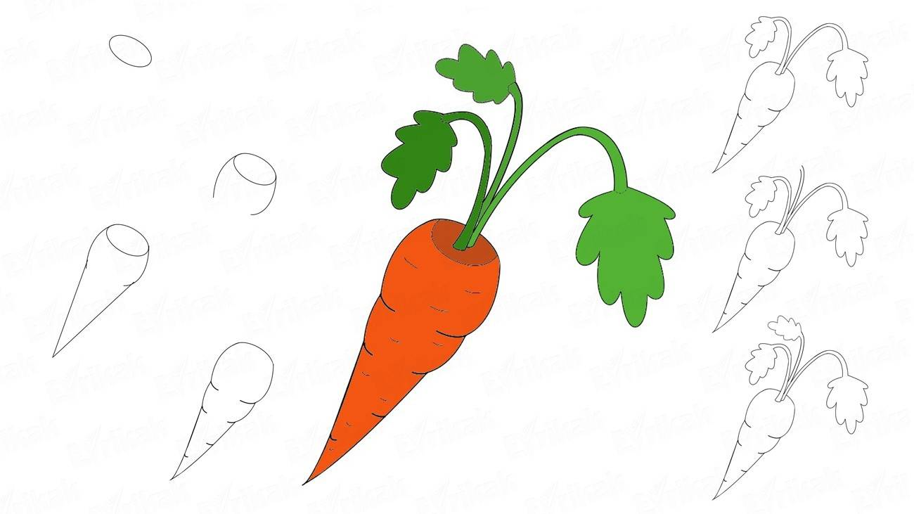 Learn how to draw a carrot using a pencil (+ coloring)
