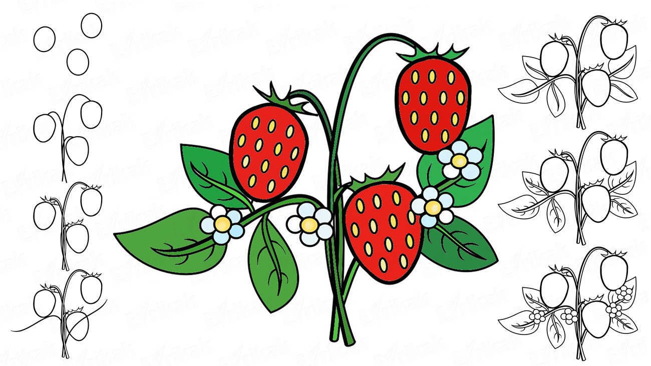 Learn to draw a wild strawberry using a pencil (+ coloring)