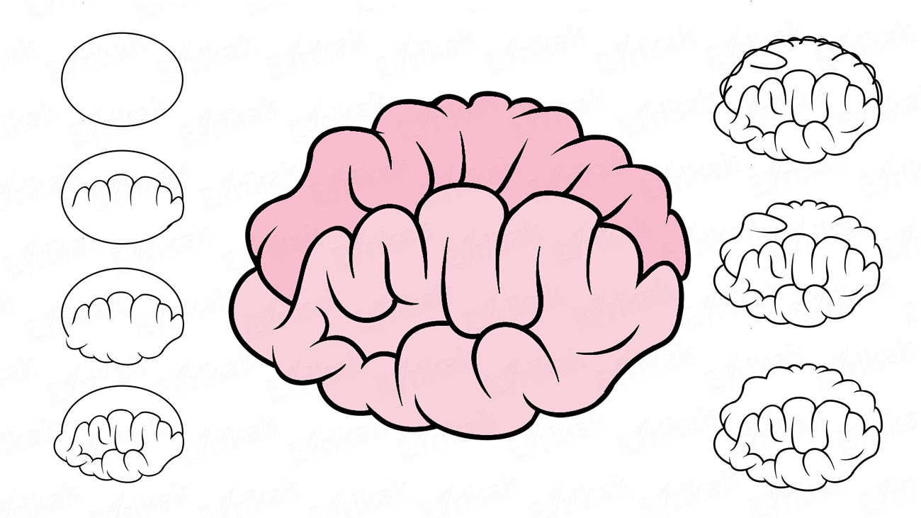 Learn how to draw the cartoon human brain in stages (+coloring)