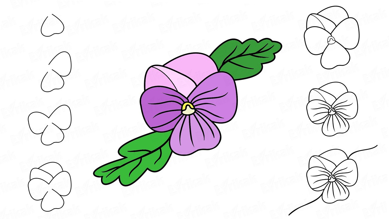 Learn to draw a violet in stages for children (+ coloring)