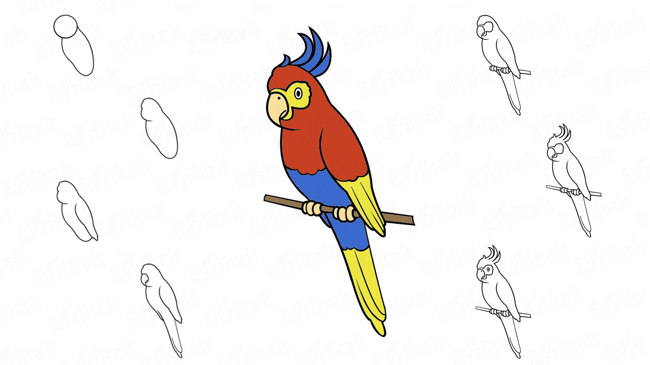 Learn to draw a kakadu bird together with your child in stages (+coloring)