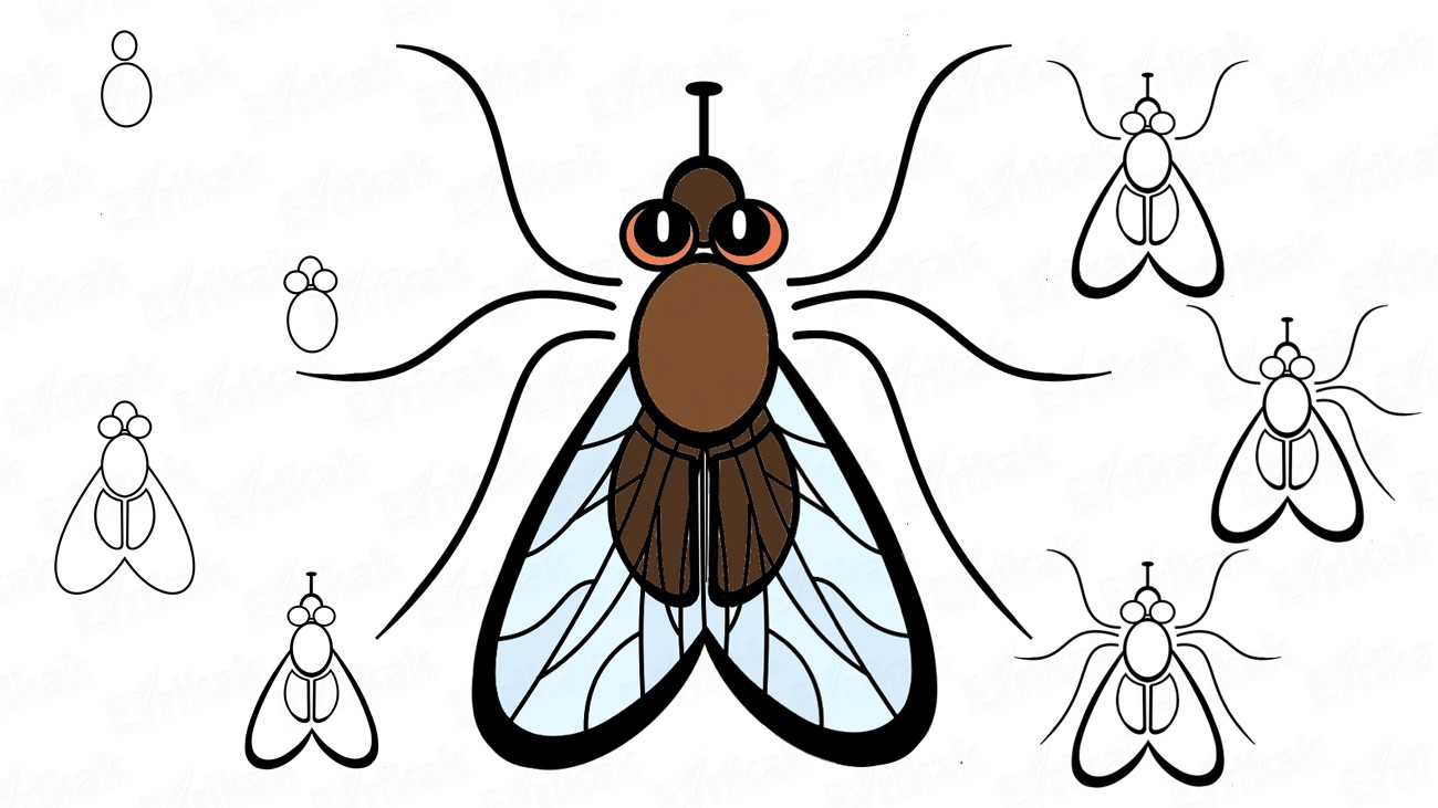 Learn to draw a fly together with a child step by step (+ coloring)