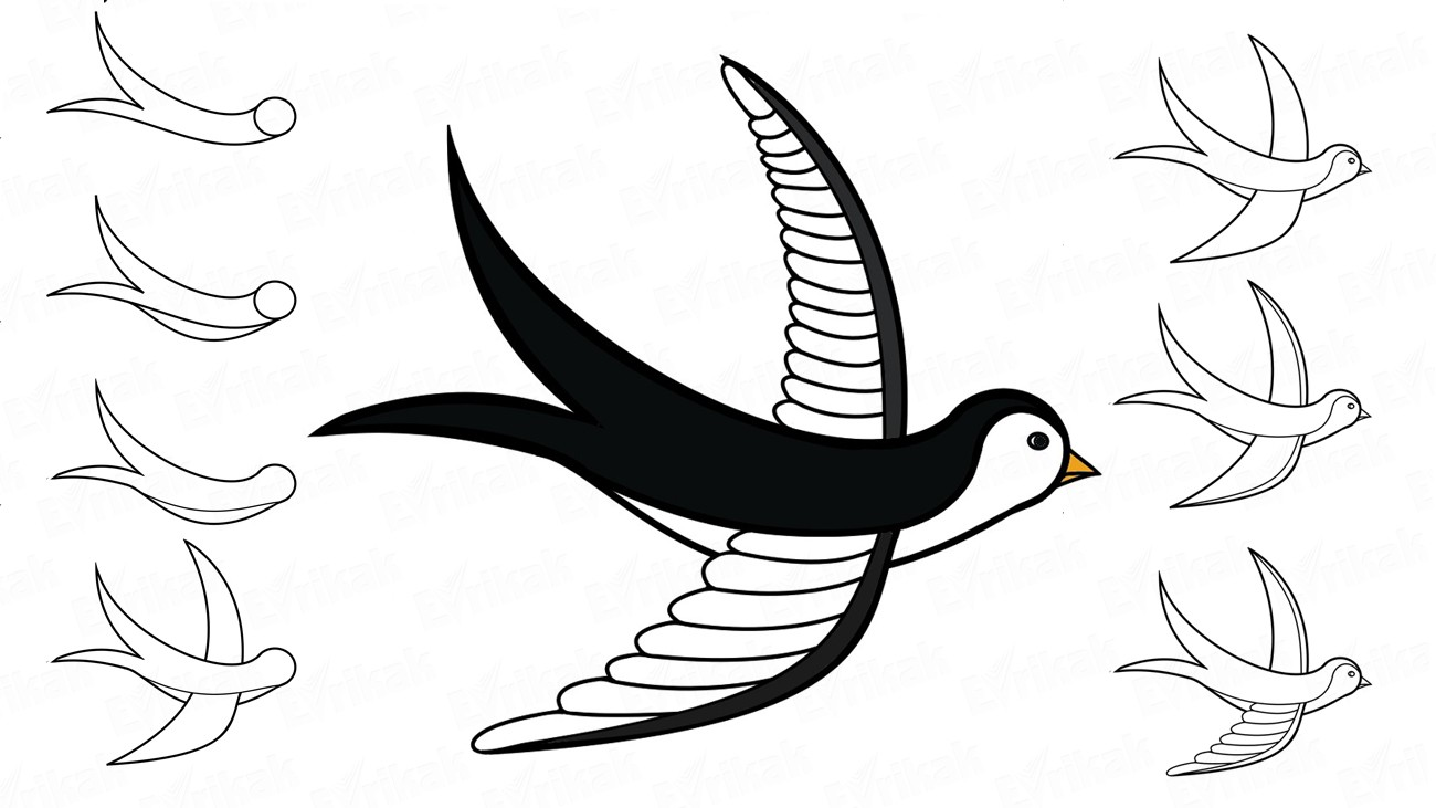 Learn to draw a swallow in stages together with a child (+ coloring)