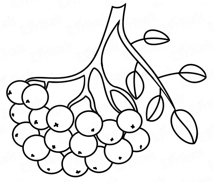 coloring online autumn flowers Gin Grape other coloring books