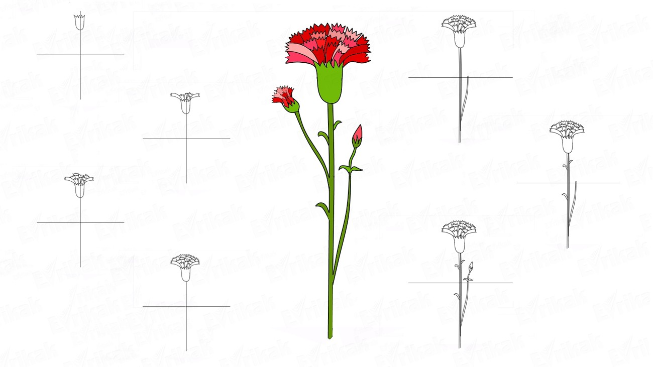 Learn to draw a carnation flower step by step for children