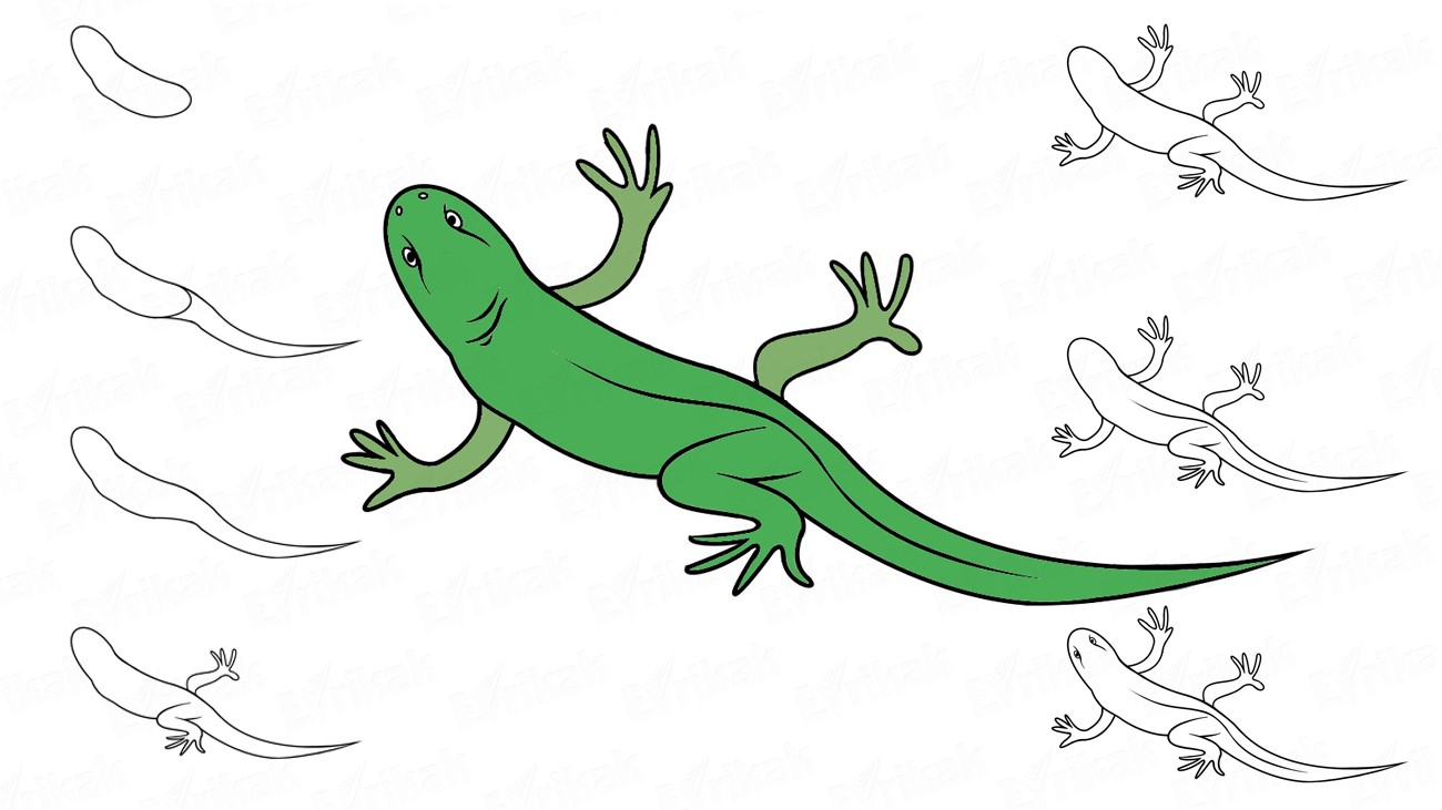 Learn to draw a lizard step by step using a pencil (+ coloring)