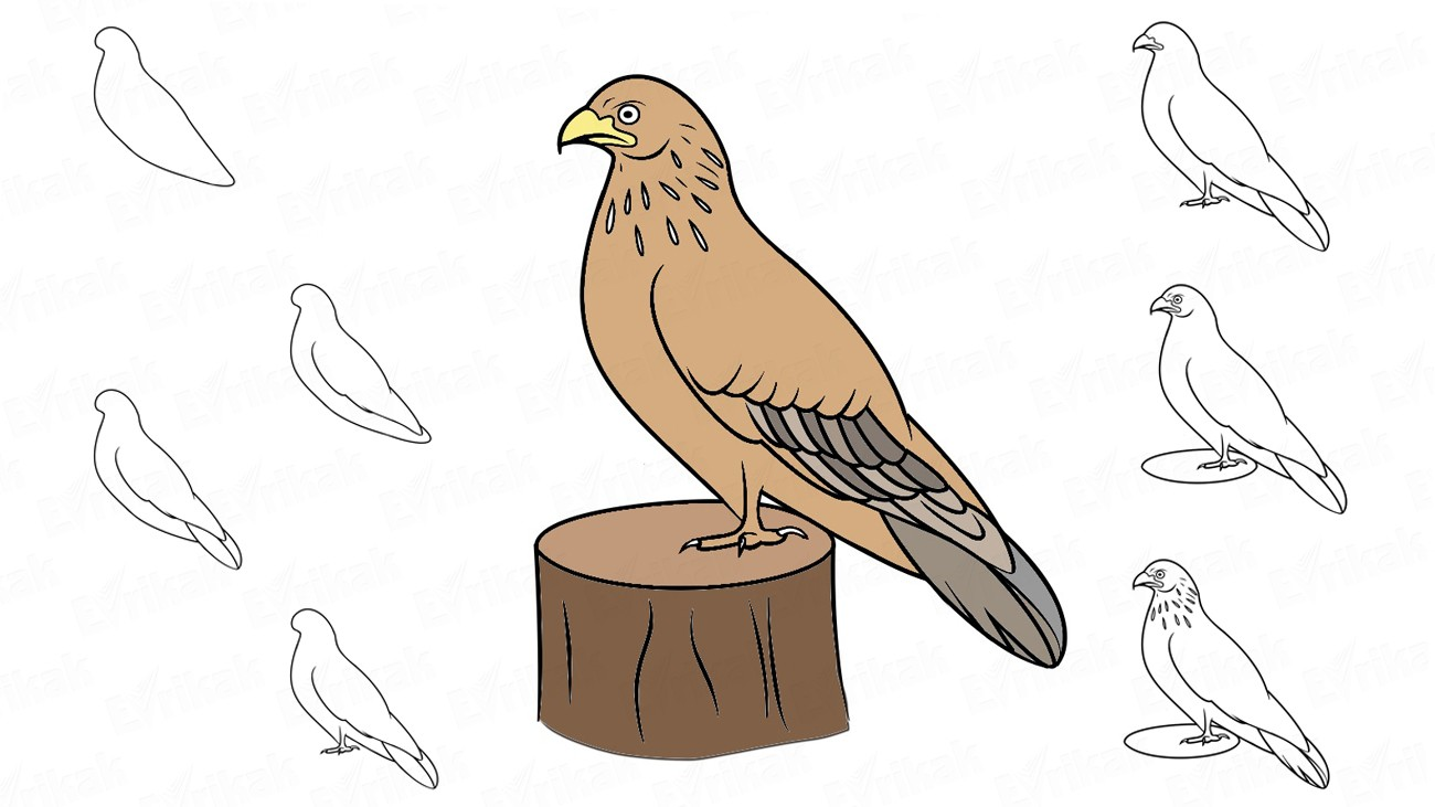 Learn to draw a hawk together with a child (+ coloring)