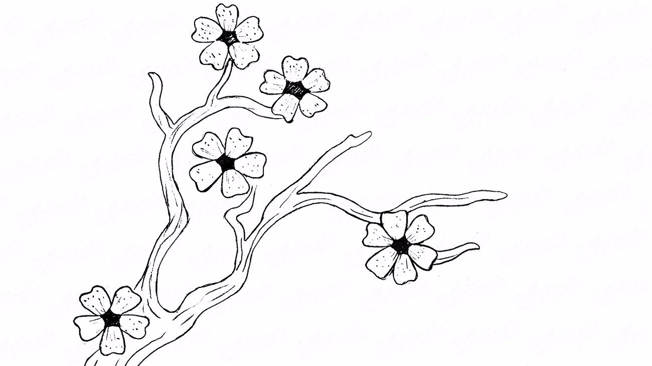 Learn to draw a cherry blossom step by step