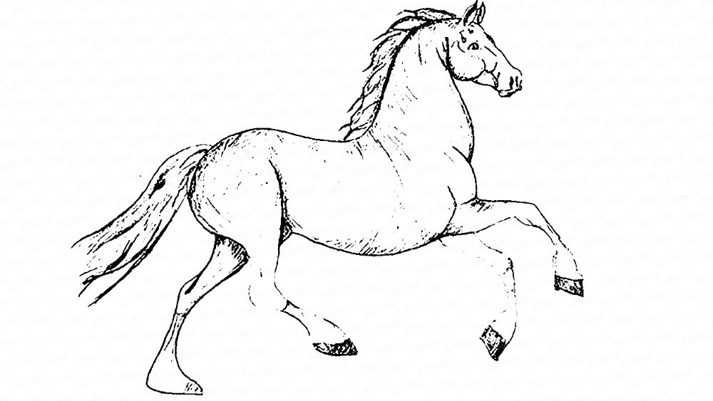 Learn to draw a beautiful horse in a jump step by step