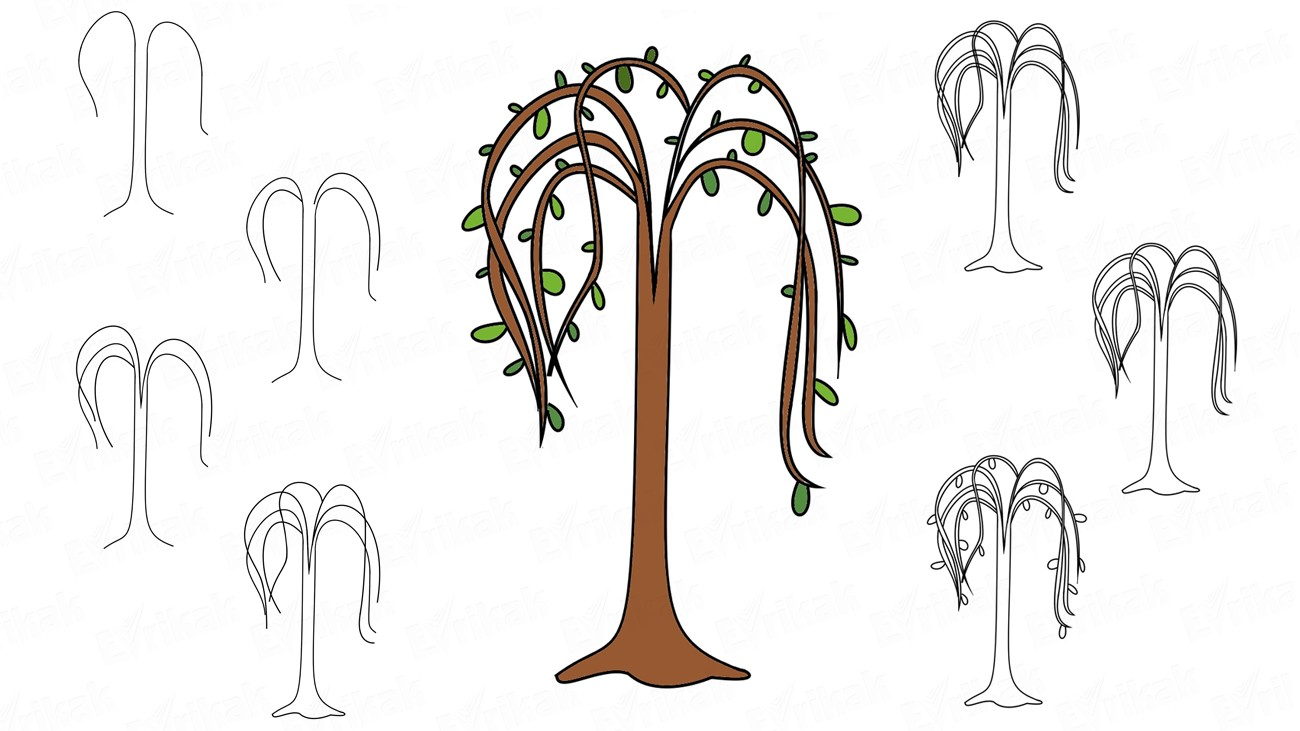 Learn to draw a willow for children (+ coloring)