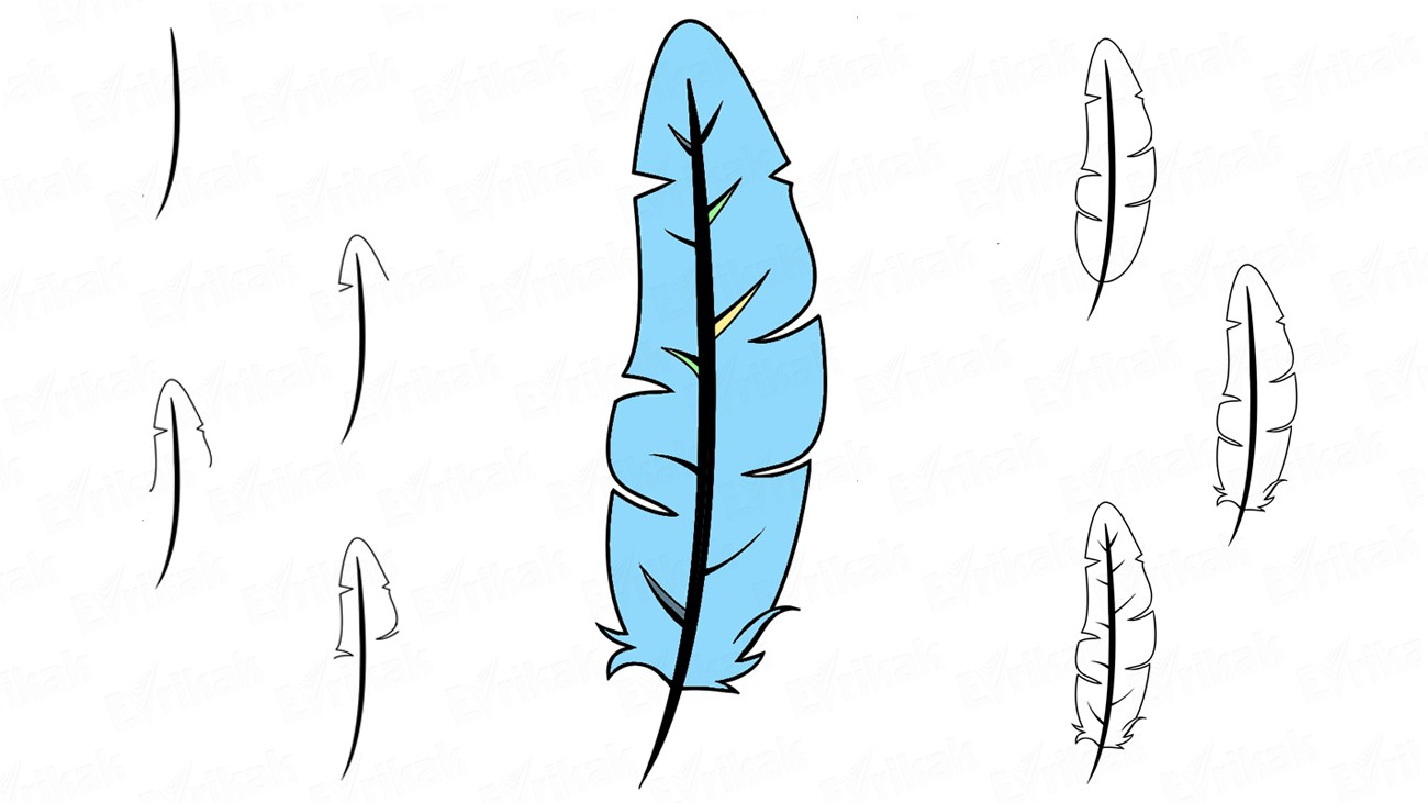 Learn to draw a bird's feather step by step (+coloring)