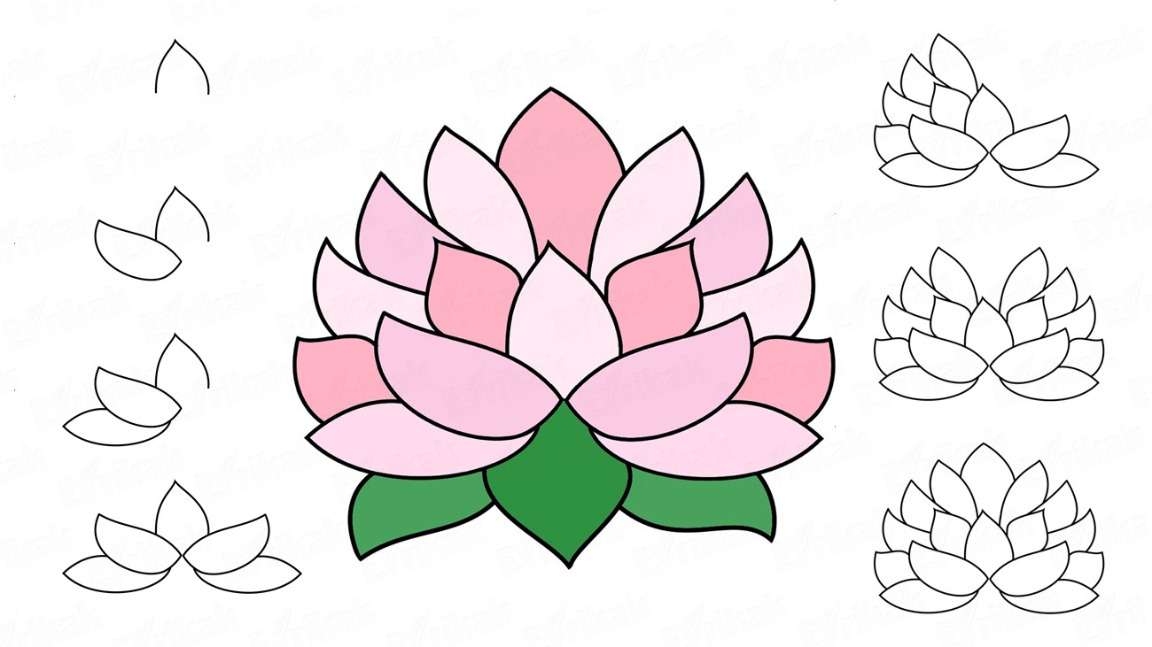 Learn to draw a lotus flower in stages (+ coloring)