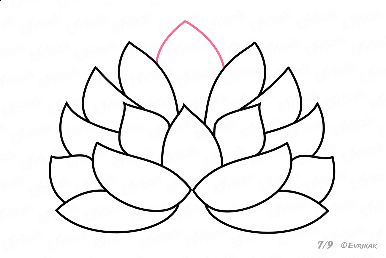Finish drawing the Lotus