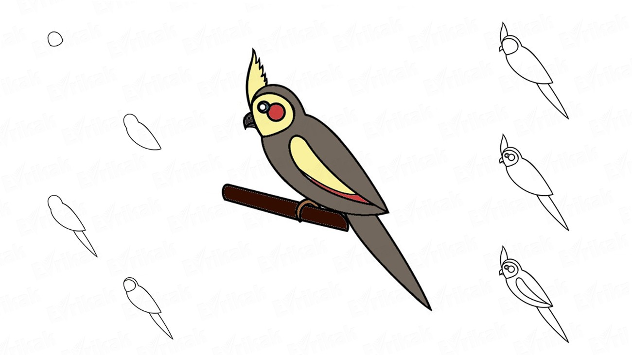 Learn to draw a parrot Corella using a pencil (+ coloring)