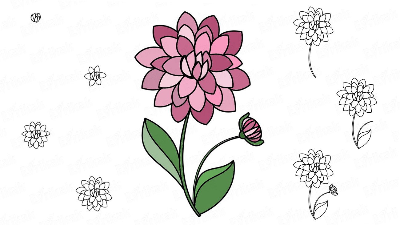 Learn to draw dahlia in stages using a pencil (+ coloring)