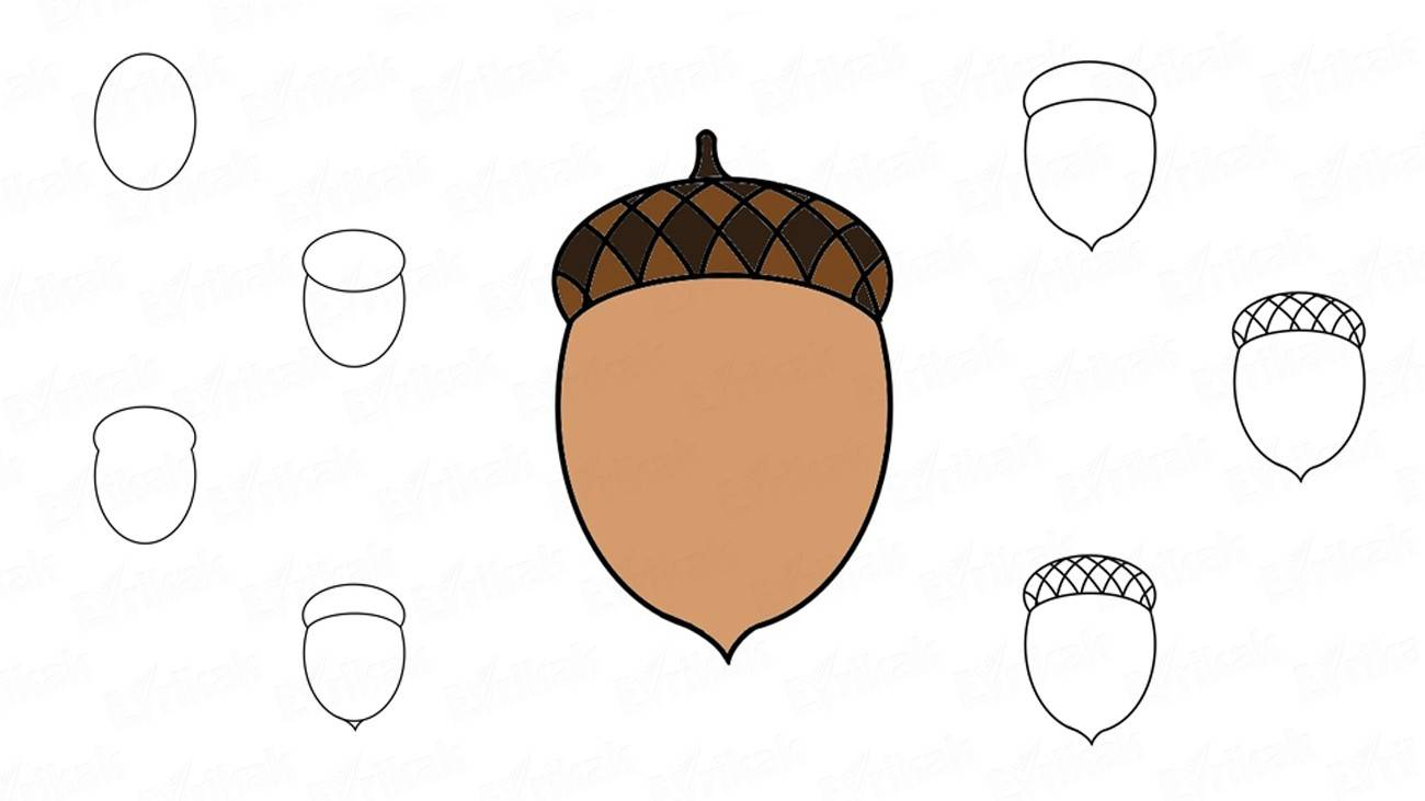 How to draw an acorn step by step