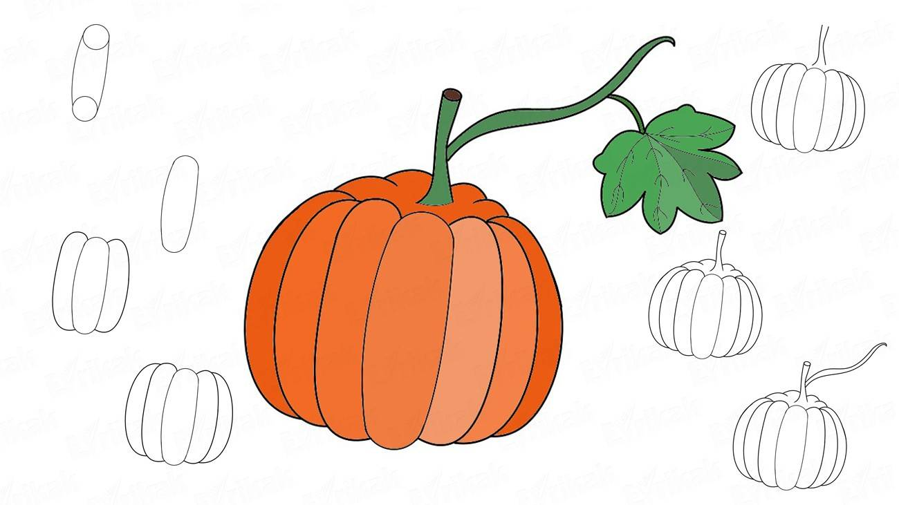 How to draw a pumpkin step by step (+coloring)