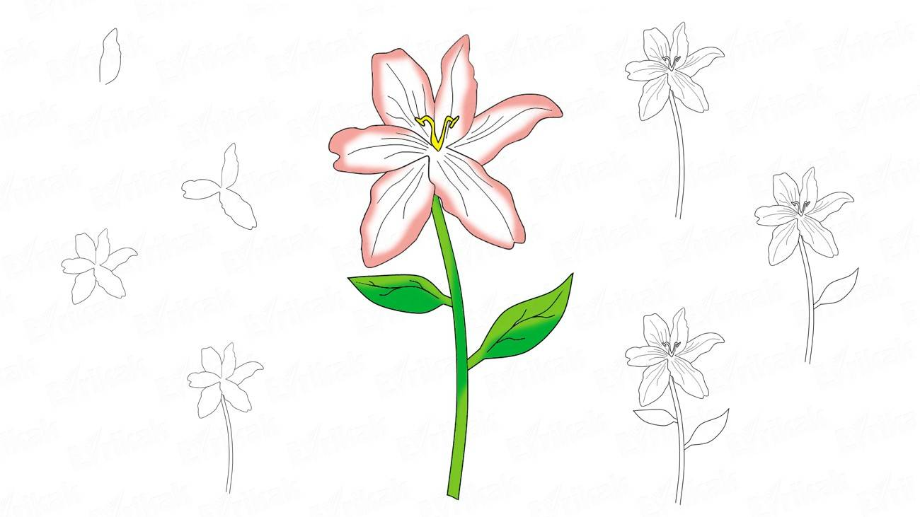 How to draw a lily step by step