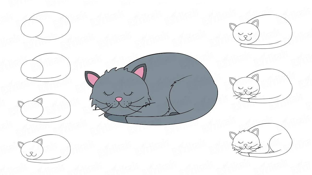 How to draw a curled up cat