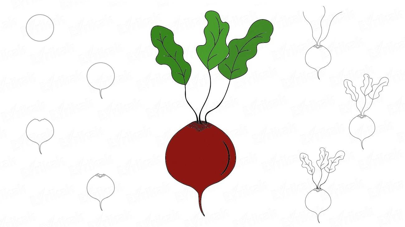 How to draw a beet in stages