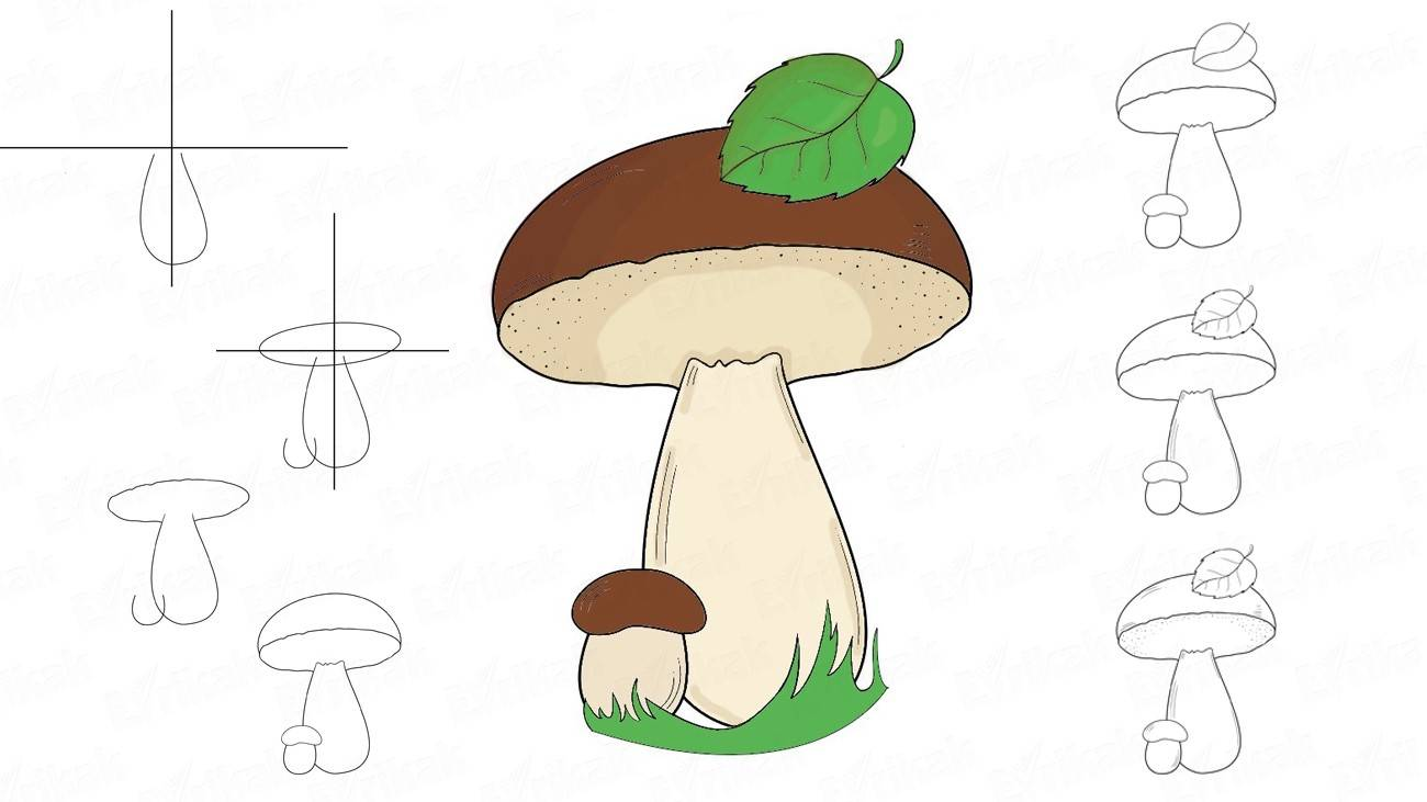 How to draw mushrooms step by step
