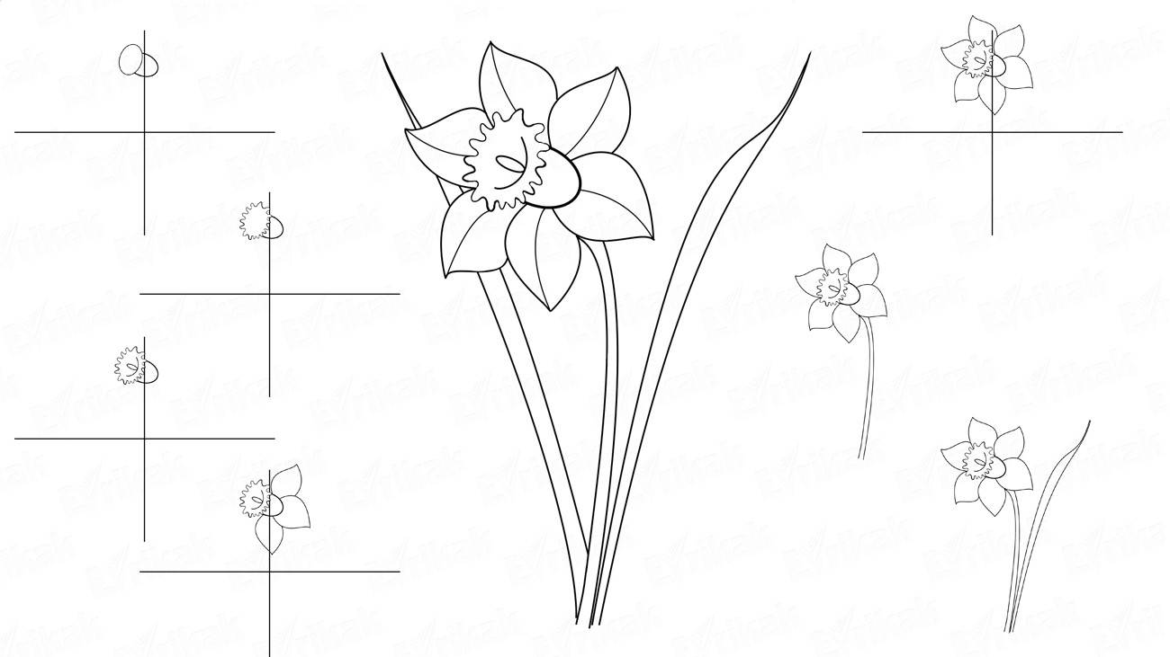 How to draw a daffodil step by step