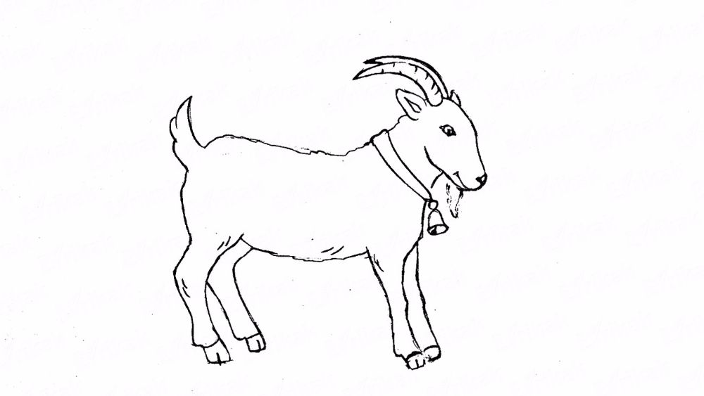How to draw a goat in stages using a pencil