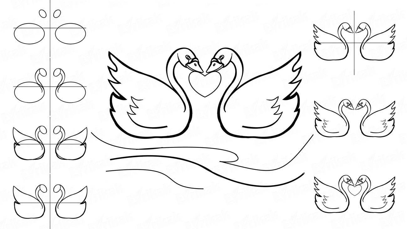 How to draw two loving swans step by step